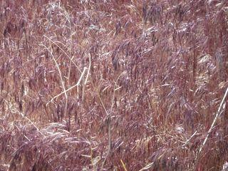 205 red grass