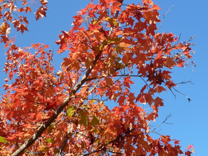 Red tree branch sky