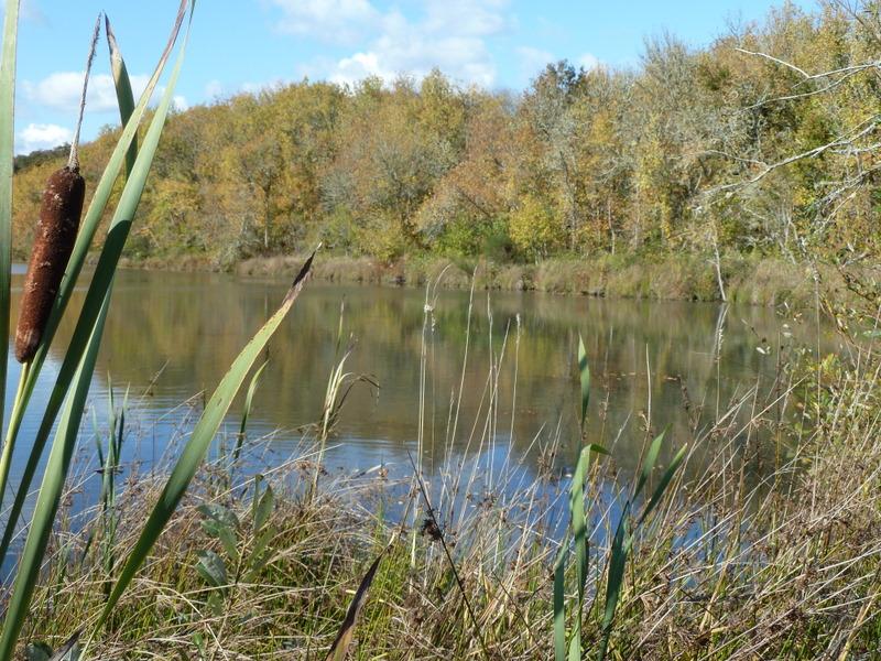 Golden colors kirk pond-1