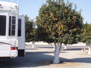 Bakersfield orange grove our spot 42