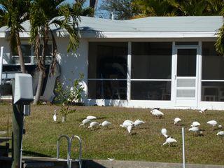 Yard birds-1