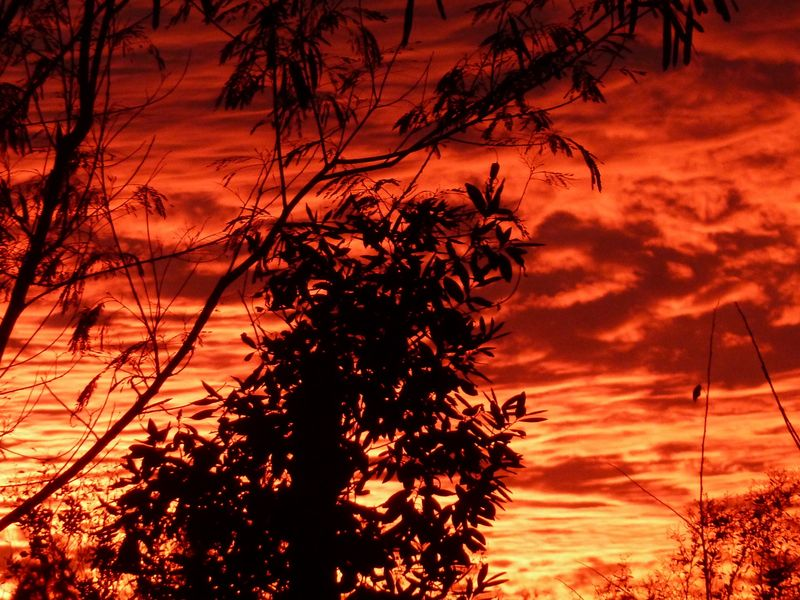 CANAL SUNSET RED BEST