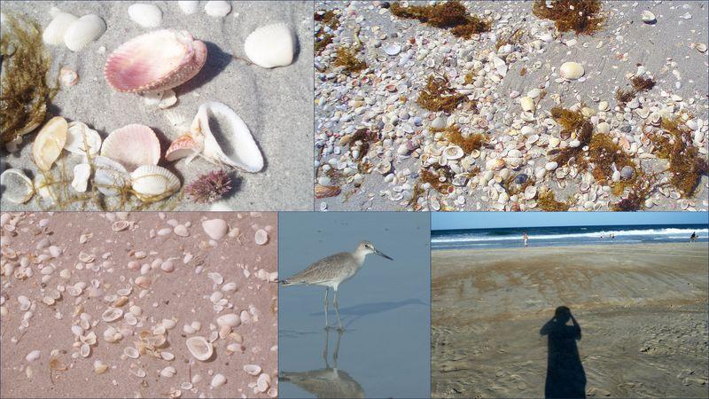 Beachcombing3