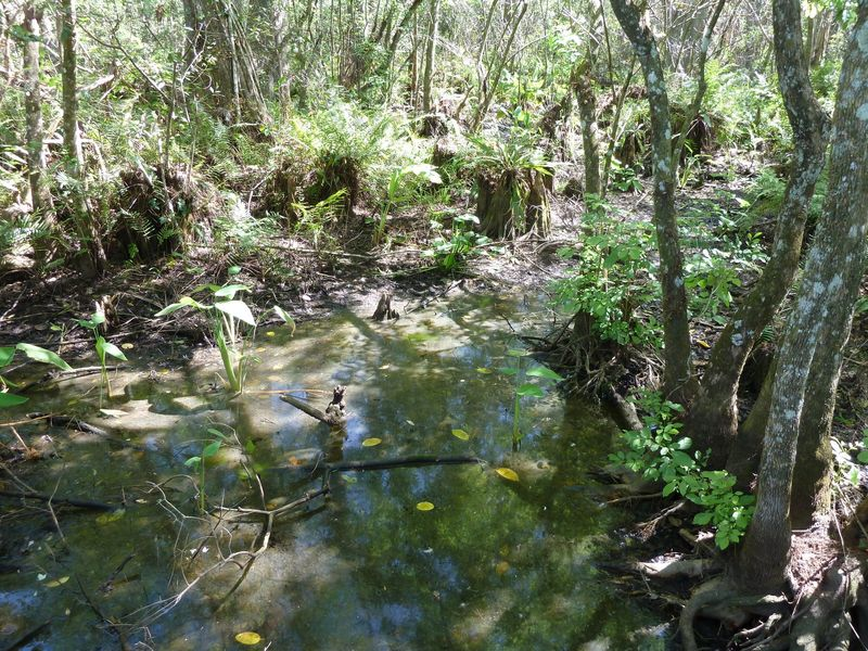 Swamp refl 2