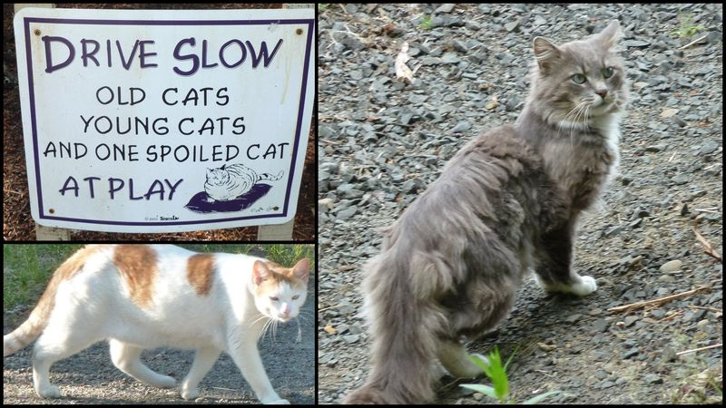 Cats sign