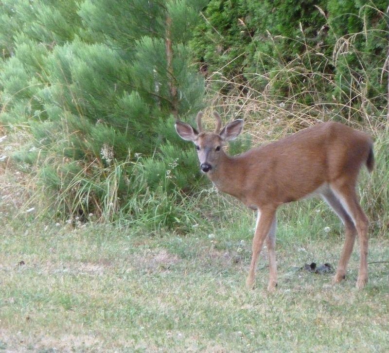 deer Jeans Rd