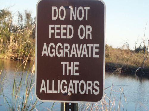 Don't aggravate alligators