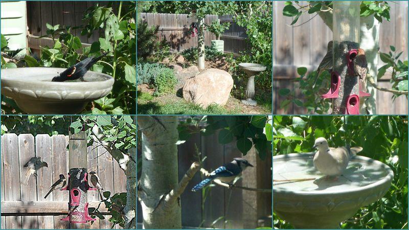 Geoff and lisas backyard