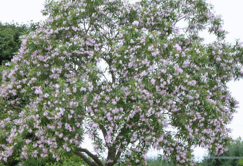 summery tree
