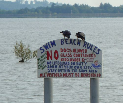 Crows and sign-