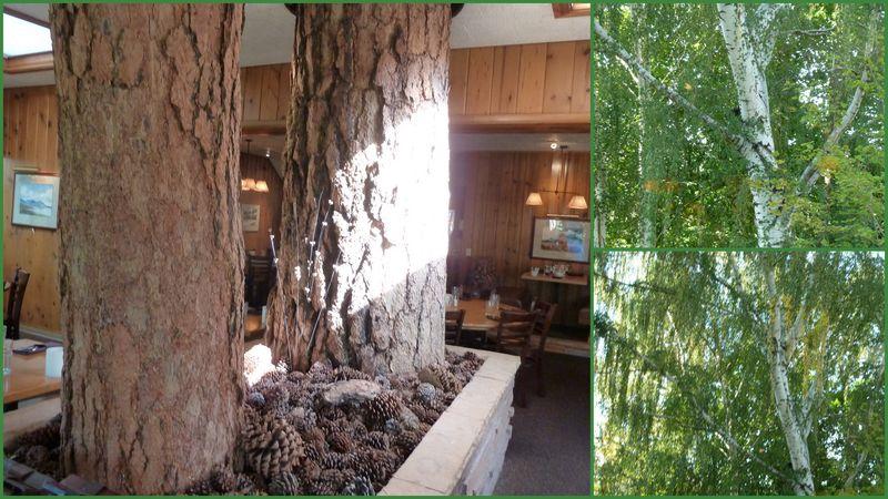 BEGONIAS and pine tavern1