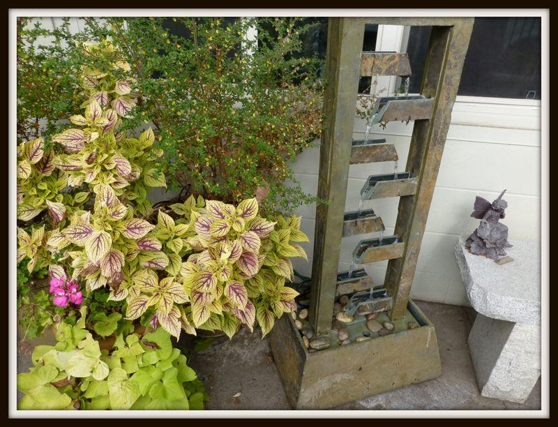 coleus garden