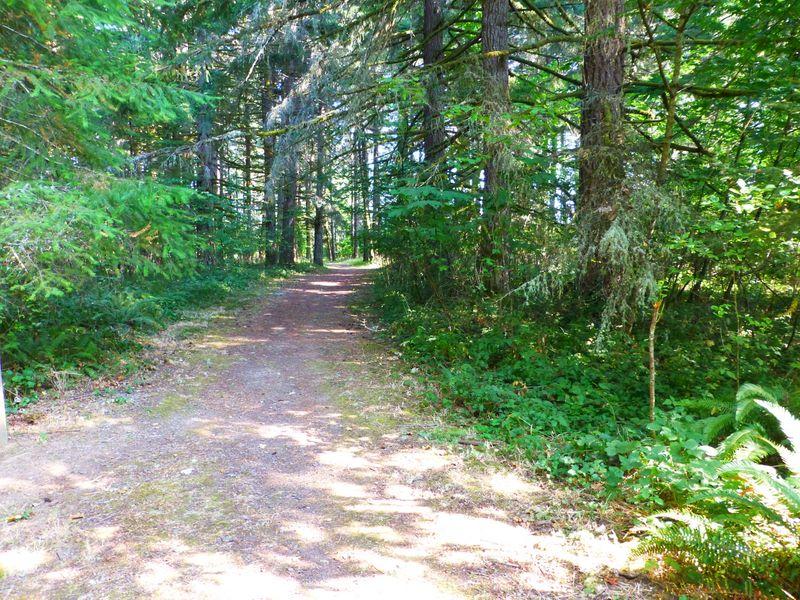 Woods path