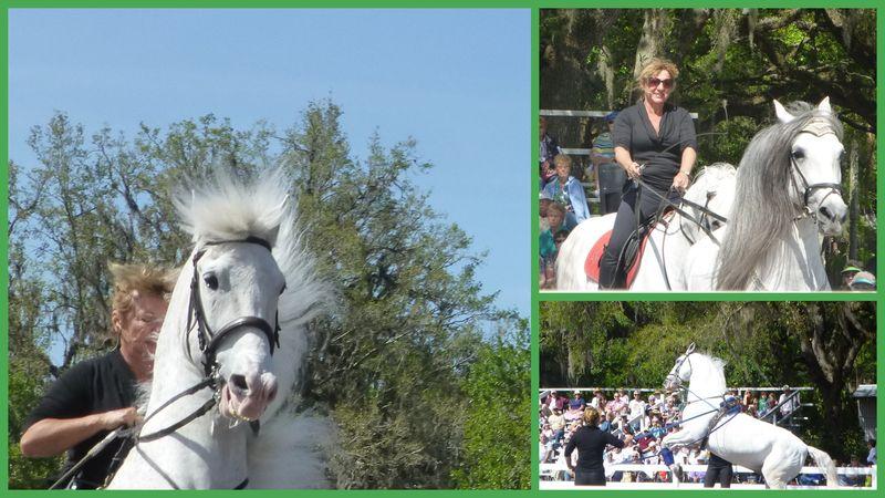 Royal Lippizan Stallions March 20131