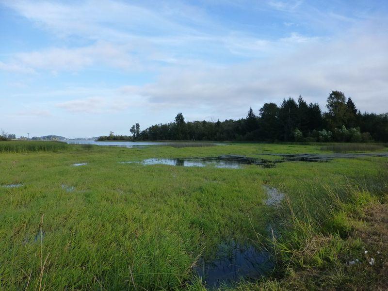 Wetlands filling in