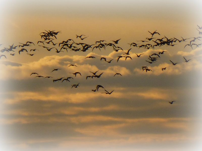 Sky pastel geese white frame