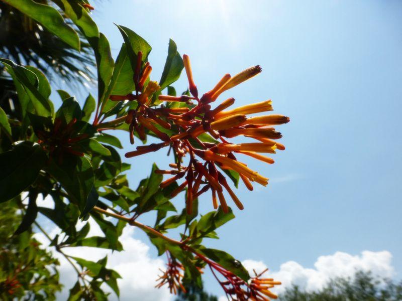 Orange flower against sky