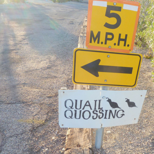 Quail quossing sign ajo rv pk (2013_11_11 18_33_27 UTC)