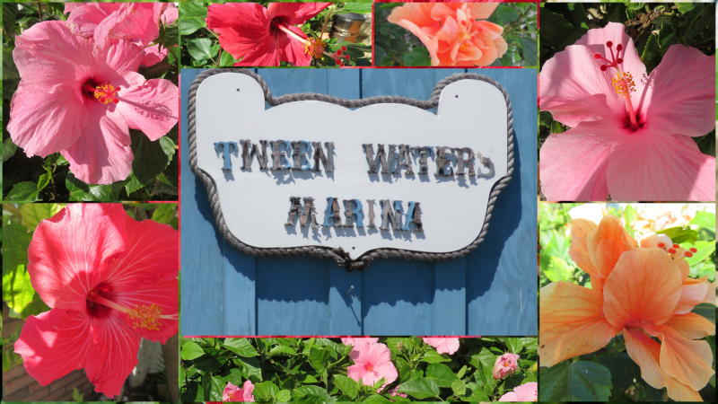 Tween waters april 2018