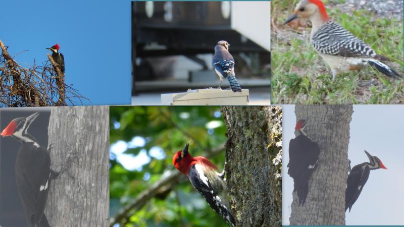 Misc birds end april post