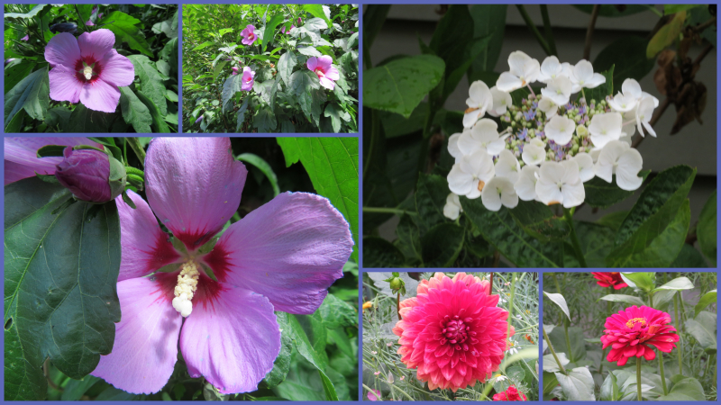 Flowers family july  2018