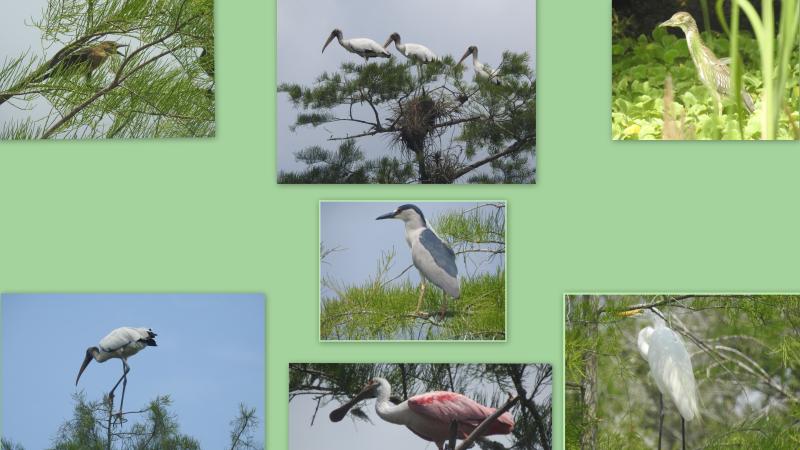 Misc fl spring birds