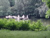 St_james_park_pelicans2
