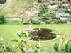 Windsor_garden