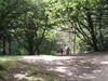 Hampstead_heath_path