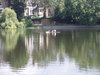 Pond_and_swans