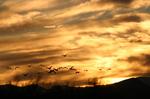 Bosque_sunset_1430