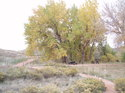 Fall_2006_colorado_100_0142