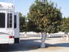 Bakersfield_orange_grove_our_spot_4
