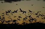 Bird_shadows_1540