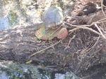 Turtle_port_a_pond_100_0101