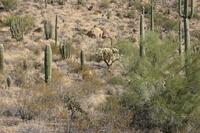 Cactus_varieties_1202