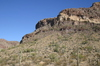 Cactus_o_hillside_1200_2
