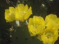 Cactus_closeup0002