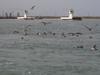 Port_a_ferry_005
