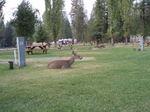Deer_beyond_hope_100_0021