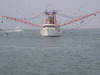 Shrimp_boat_with_birds_47