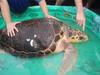 Smaller_turtle_86